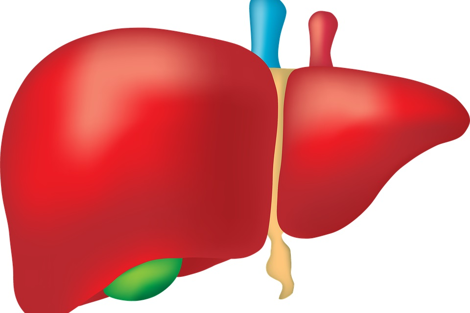 Why Liver Transplant is Done
